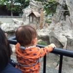 上野動物公園の詳細へ