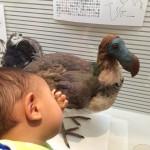 我孫子市鳥の博物館の詳細へ