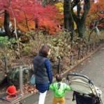 我孫子近郊で紅葉をみにいくなら!本土寺!の詳細へ